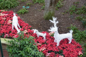 Disney's Grand Floridian Holiday Decorations 2015