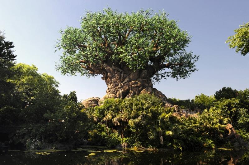 Tree of Life, <a href=
