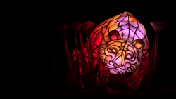 Disney's Animal Kingdom Rivers of Light - tiger