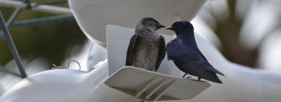 Songbirds Get Their Own Resort at Disney World