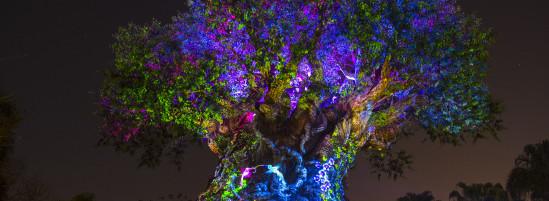 """Tree of Life Awakens"" Debuting at Disney's Animal Kingdom"