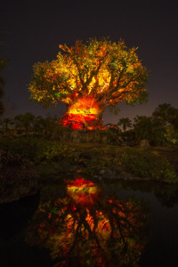 Tree of Life Awakens at Disney's Animal Kingdom 2016